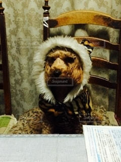 虎の皮を被った犬。の写真・画像素材[2714468]