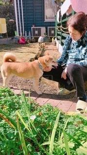 庭にいる人と犬の写真・画像素材[2699940]