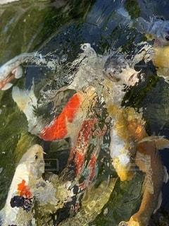 水中の魚の群の写真・画像素材[2699974]