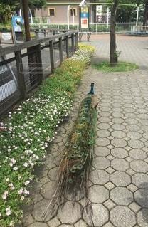 お散歩中の写真・画像素材[2556004]