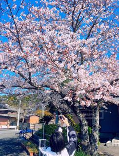 女性,1人,花,春,桜,屋外,樹木,草木,桜の花,さくら