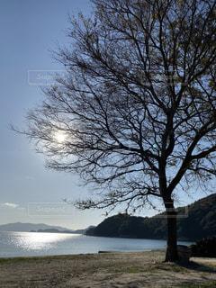 自然,風景,海,空,屋外,太陽,水面,海岸,光,樹木,草木,日中