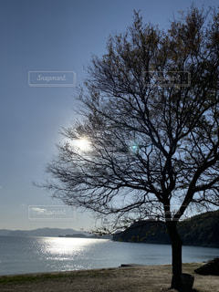 自然,海,空,屋外,太陽,水面,海岸,光,樹木,草木,日中