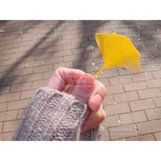イチョウを持つ手の写真・画像素材[2686609]