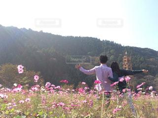 コスモス畑で。の写真・画像素材[2563460]