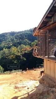 おやつ待ちの猿の写真・画像素材[2564004]
