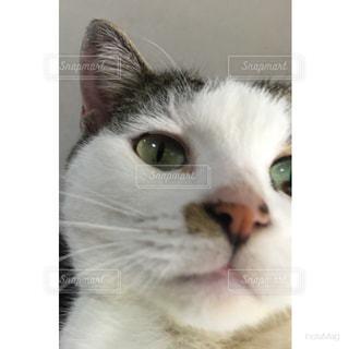 猫,動物,かわいい,ペット,人物,見つめる,ネコ