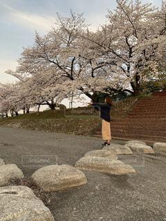 女性,花,春,桜,木,屋外,花見,満開,樹木,お花見,岩,イベント