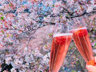 花,春,桜,屋外,ピンク,樹木,お花見,グラス,乾杯,ドリンク,女子会,シャンパン,さくら,おしゃれ