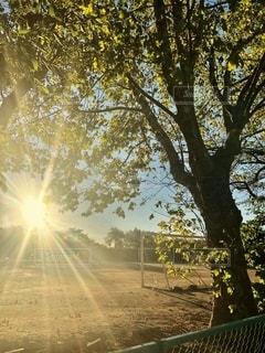 グランドの朝日の写真・画像素材[2669289]