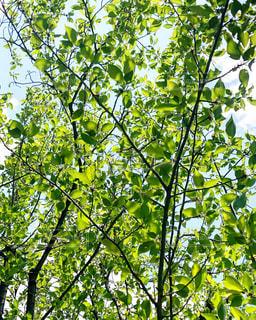 新緑の中の写真・画像素材[3142194]