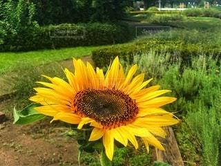 夏の花の写真・画像素材[3579004]