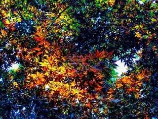 秋色の写真・画像素材[3712611]