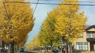 通りの真ん中にある木の写真・画像素材[2558428]