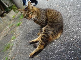 家族,猫,動物,屋外,ペット,人物,座る,コンクリート,地面,トラ,オス,見返り,ネコ