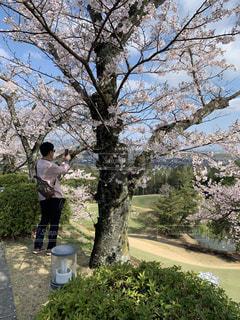 桜の風景、撮影中の写真・画像素材[2561902]