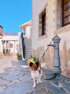 建物の前に座っている犬の写真・画像素材[2715086]