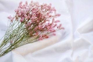 白シーツの上に置いたピンクのドライフラワーの写真・画像素材[2811814]