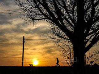 犬,自然,風景,空,夕日,木,屋外,太陽,雲,夕焼け,夕暮れ,散歩,夕方,シルエット,オレンジ,光,樹木,電線,人,夕陽,夕景,夕焼け雲,草木,枯木