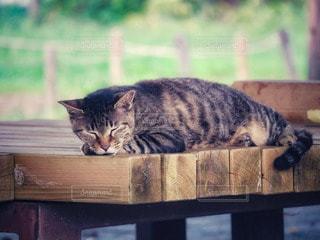 猫,動物,木,屋外,かわいい,ベンチ,ペット,人物,癒し,お昼寝,木目,穏やか,ネコ