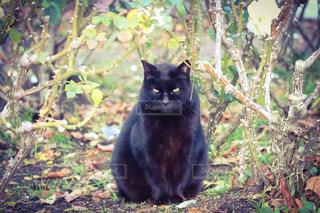 猫,公園,動物,木,屋外,かわいい,黒,草,ペット,人物,座る,黒猫,クロネコ,目,見つめる,ネコ
