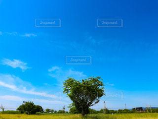 真っ青な空に映えるハートの木の写真・画像素材[2985000]