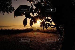 空,絶景,木,太陽,朝日,シルエット,光,雲海,日の出,き