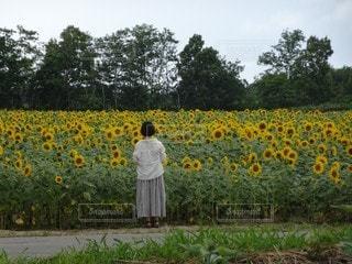 花畑の写真・画像素材[2563969]