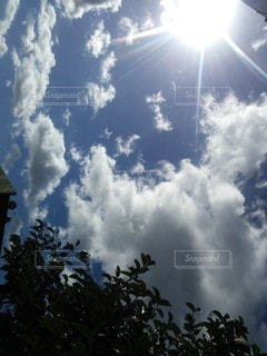 自然,空,太陽,光,樹木,柿,日中,柿の木