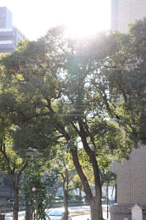 自然,空,屋外,太陽,光,樹木,太陽光,草木,温かみ,暖かみ