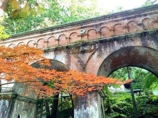 京都の紅葉の写真・画像素材[2570281]