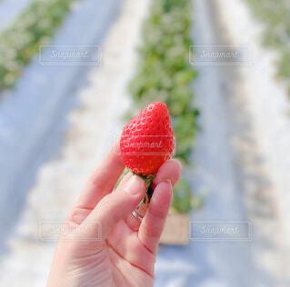 果物を持つ手の写真・画像素材[3662176]