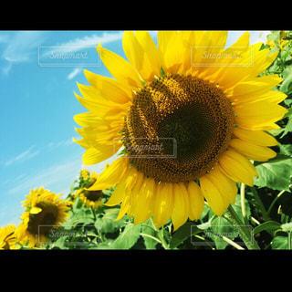 花の写真・画像素材[238559]