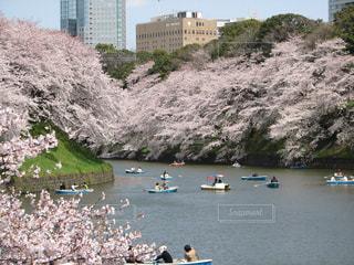 No.574747 桜