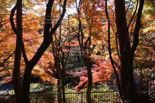 木から葉キリン食べる - No.758589