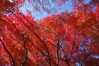 近くの木のアップ - No.758595