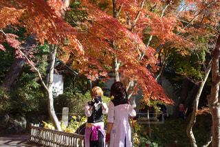 人と木の隣に立っている女性 - No.758621