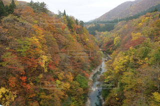緑豊かな緑の丘陵と川 - No.873324