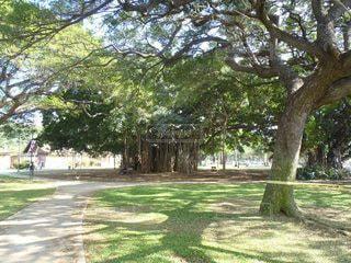 ハワイの木の写真・画像素材[2627224]