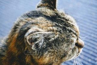 猫,動物,ペット,横顔,鼻,耳,ネコ,ひげ,トラ柄