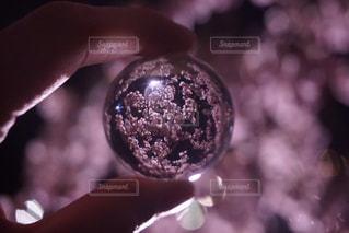 花,春,桜,木,手,花見,夜桜,お花見,イベント,さくら,ブロッサム