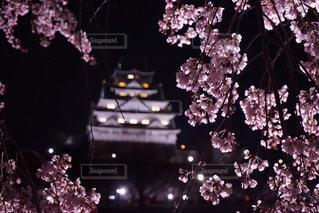 花,春,桜,木,城,花見,夜桜,お城,お花見,イベント,さくら,ブロッサム
