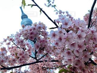 花のクローズアップの写真・画像素材[3014755]