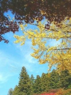 自然の写真・画像素材[2583052]