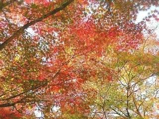 秋のグラデーションの写真・画像素材[2583054]
