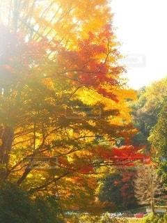 紅葉と秋の空の写真・画像素材[2583060]