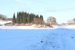 雪に覆われた野原の写真・画像素材[2808511]