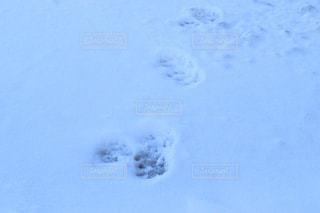 動物の足跡の写真・画像素材[2808736]