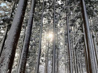 雪に覆われた森のクローズアップの写真・画像素材[2860539]