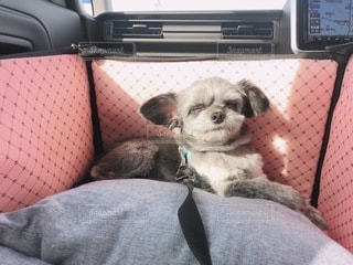 毛布の上に座っている犬の写真・画像素材[2713012]